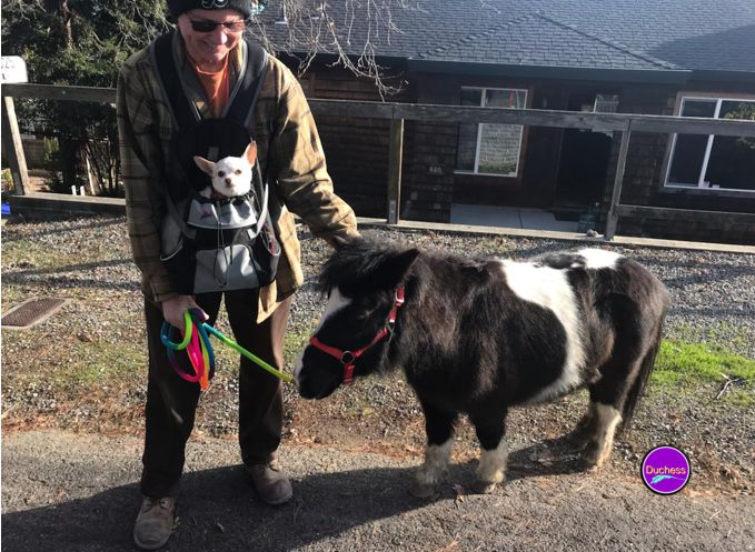 Vance with Sonny and KYA, the miniature horse, on first day home from Angels For Minis Rescue.